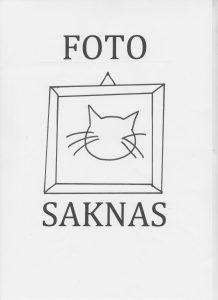 Katt-foto saknas