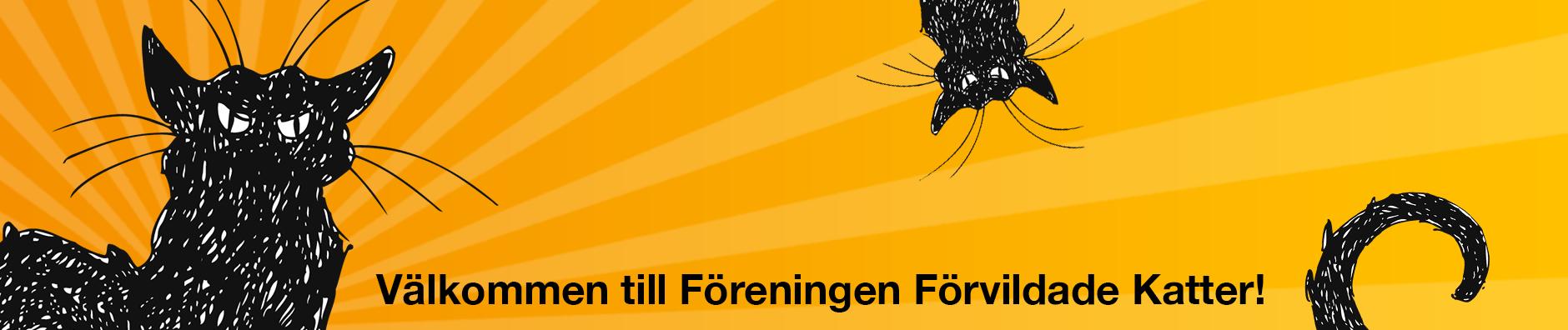 FFK – Föreningen Förvildade Katter