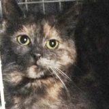 Söta katten Sofia är hemlös och söker hem
