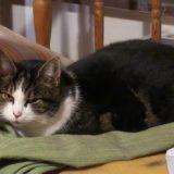 Katten Visan söker lugnt hem