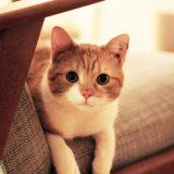 Gerda hittades i en trappuppgång